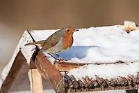 Rotkehlchen, an der Vogelfütterung, Fütterung im Winter, im mit Körnern gefüllten Futterhäuschen, Vogelhäuschen, Futterhaus, Vogelfutterhäuschen, Vogelfutterhaus, Vogelhaus, Winterfütterung, Erithacus rubecula, robin