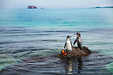 GALAPAGOS ISLANDS, ECUADOR, Isabela Island, penguins seen on the rocks in Elisabeth Bay