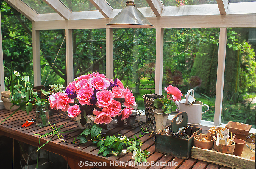 Bouquet of fresh cut pink roses, 'Bewitched' on potting bench in greenhouse shed