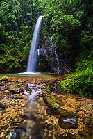 Waterfall San Vincente, Mashpi Cloud Forest, Choco Rainforest, Ecuador, South America