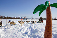 Jeff King arrives @ Cripple amidst *Aloha* theme inflatable palm tree 2006 Iditarod Interior AK Winter