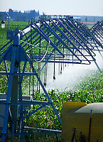 Center pivot irrigation structures spraying water in corn field.