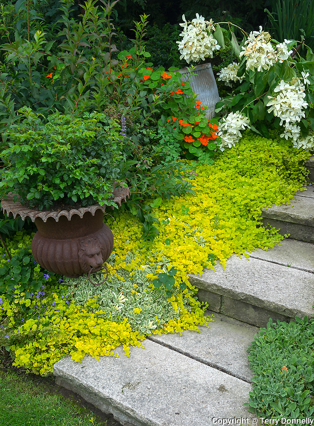 Vashon-Maury Island, WA: Stone steps leading through a summer garden with potted plants and flowers