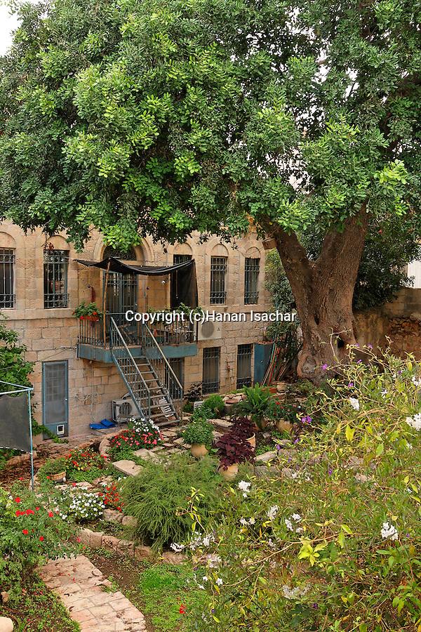 Israel, Carob tree (Ceratonia Siliqua) in Jerusalem<br />