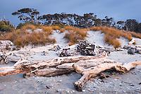 Driftwood and pingao, native sand dune grass at dusk at Ship Creek, World Heritage Area, South Westland, West Coast, New Zealand