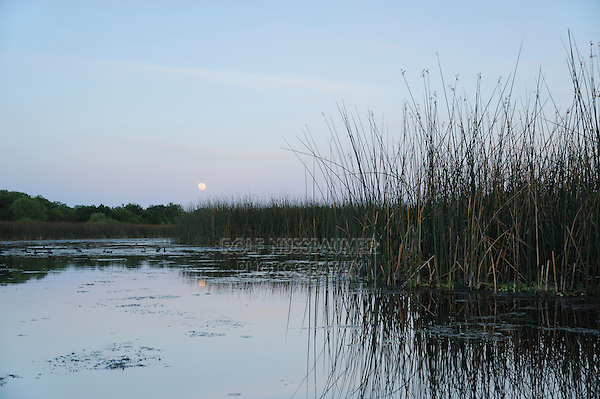 Lake at moonrise, Fennessey Ranch, Refugio, Corpus Christi, Coastal Bend, Texas Coast, USA