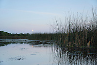 Lake at moonrise, Fennessey Ranch, Refugio, Corpus Christi, Coastal Bend, Texas Coast, USA