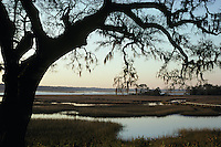 Salt marsh and live oak; South Carolina