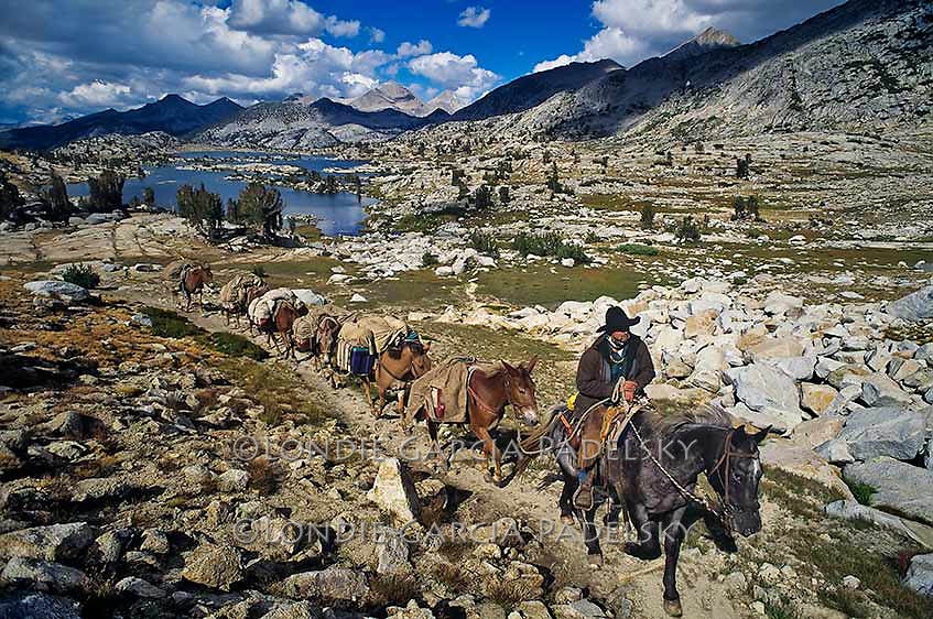 Cowboy Frank Smith leading his pack mules at Marie Lake near Seldon Pass on the John muir Trail, Sierra National Forest, Fresno County, California