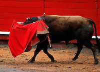 MANIZALES-COLOMBIA. 6-01-2014. Esta curiosa fotografia  tomada por el fotografo Santiago Osorio muestra a este toro llevando la muleta del matador en su cabeza  durante la temporada taurina de la 58 feria de Manizales / This curious photograph taken by photographer Santiago Osorio shows this bull matador carrying crutch in his head during the bullfighting season 58 Manizales Fair .Photo: VizzorImage / Santiago Osorio / Stringer