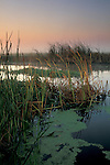 Misty morning light over tule reeds and water, Jones Tract, San Joaquin delta, near Stockton, California