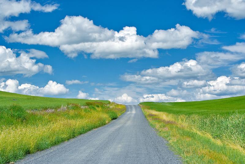 Dirt road through farmland. The Palouse, Washington