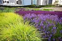 Lurie Garden reconstructed prairie meadow garden at Millenium Park, downtown Chicago; plant design Salvias and Moor Grass by Piet Oudolf