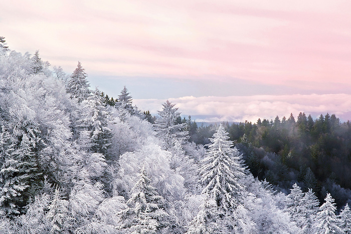 """""""MOUNTAIN CALM"""" -- Sunrise after a recent snow in Great Smoky Mountains National Park near Newfound Gap. The park is located on the border of North Carolina and Tennessee in the southern Appalachian mountains."""