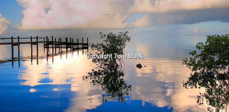 Dock and Mangroves, Islamorada, Florida Keys