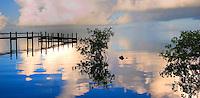 Dock and Mangroves, Islamorada, Florida Keys