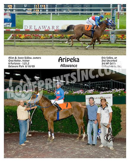 Aripeka winning at Delaware Park on 6/16/09