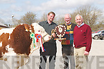SHOW: At the Kerry Shorthorn Breeders 83rd Annual Show and Sale of Bulls at Castleisland.Mart on Tuesday