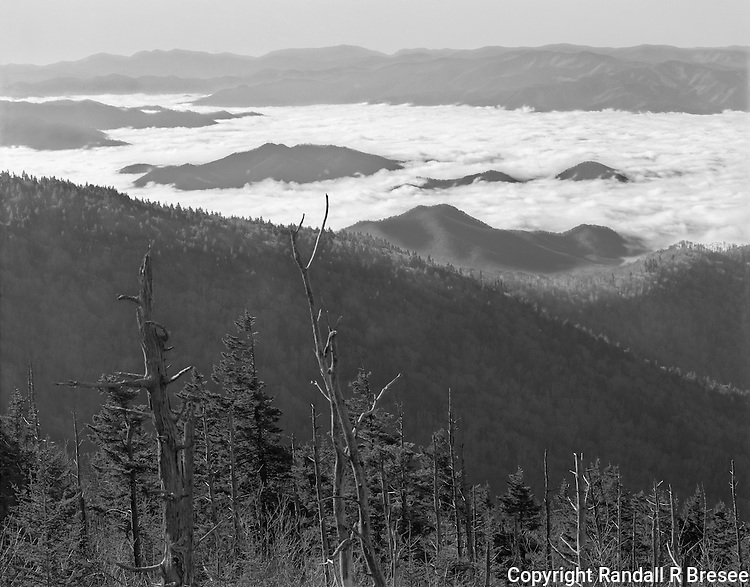 &quot;View From The Clingmans Dome Parking Area&quot; Great Smoky Mountains National Park, North Carolina<br /> <br /> Early mornings sometime offer spectacular views of clouds nestled in lower valleys and such views are commonly seen at the Clingmans Dome parking area. Since my camera faced the general direction of the sun, the contrast of the scene was strong  so I decreased negative development time to reduce image contrast in this black and white photograph.