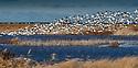 December 15, 2015 / Forsythe Wildlife Preserve / Photo by Bob Laramie