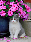 Carl, ANIMALS, photos(SWLA3737,#A#) Katzen, gatos