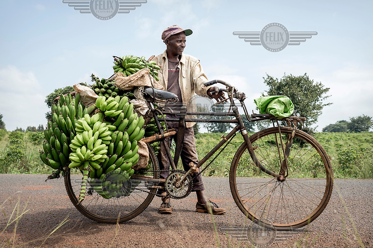 Joseph Kiara, a banana trader and transporter, with his bicycle loaded with the fruit.