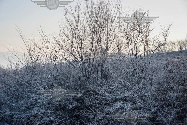 Frost covered trees and undergrowth.