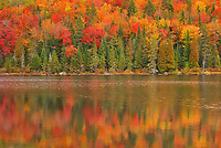 Autumn  colors reflected in Lac &agrave; Sam in the Laurentian Mountains. Great Lakes - St.  Lawrence Forest Region.<br />La Mauricie National Park<br />Quebec<br />Canada