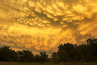 Golden mammatus clouds paint the sky at sunset after a day of severe thunderstorms in central Oklahoma.