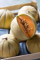 Europe/France/Provence-Alpes-Cote d'Azur/84/ Vaucluse/Cavaillon :  Melon de Cavaillon