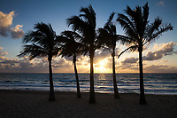 Palm Trees at Sunrise, Fort Lauderdale Beach, Florida, USA.
