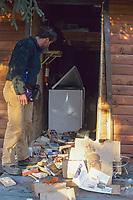 Photographer views damage to a log cabin facility by a coastal brown bear, Brooks Lodge, Katmai National Park, Alaska