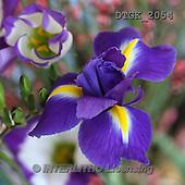 Gisela, FLOWERS, BLUMEN, FLORES, photos+++++,DTGK2054,#f#