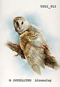 GIORDANO, REALISTIC ANIMALS, REALISTISCHE TIERE, ANIMALES REALISTICOS, paintings+++++,USGI611,#A#