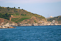 Vineyard by the sea. Banyuls sur Mer, Roussillon, France