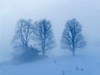 CHE, Schweiz, Kanton Bern, Berner Oberland, Grindelwald: Skilaufen im Nebel   CHE, Switzerland, Bern Canton, Bernese Oberland, Grindelwald: skiing in the haze