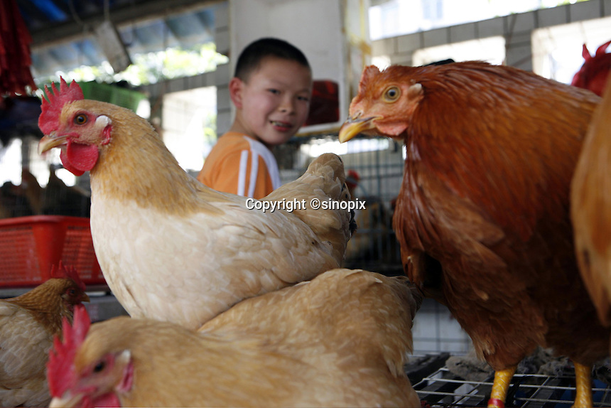 A young boy sits among the live chickens, waste and feces in the Futian agriculture and produce market.<br /> 08 February, 2007.<br /> Shenzhen, China