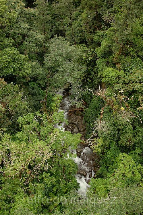 Rainforest creek in Baru volcano, Chiriqui highlands, Panama, Central America