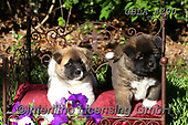 Bob, ANIMALS, REALISTISCHE TIERE, ANIMALES REALISTICOS, dogs, photos+++++,GBLA4290,#a#, EVERYDAY