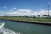 Pisa, canale dei Navicelli, tenuta San Rossore