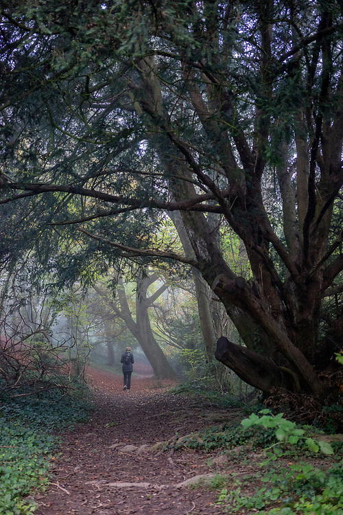 Old pathway with beech trees in Hampshire England