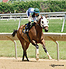 Dipping Diamonds winning at Delaware Park on 7/17/14