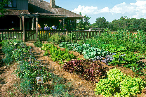 Large fenced in vegetable garden grows in full sun in early summer in backyard directly off deck of house