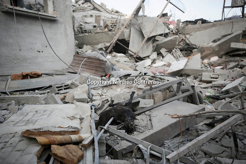 "In this Friday, Aug. 15, 2014 photo, a goat's carcass lays among the rubble of a house destroyed by an israeli airstrike during the ""Protective Edge"" military operation in Shuyaja neighborhood in Gaza City. After a five days truce was declared on 13th August between Hamas and Israel, civilian population went back to what remains from their houses and goods in Gaza Strip. (Photo/Narciso Contreras)"