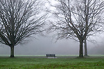 Trees in a misty park with bench seating
