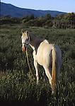 white horse near Taos