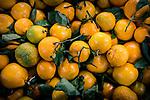 11.14.18 - Orange....
