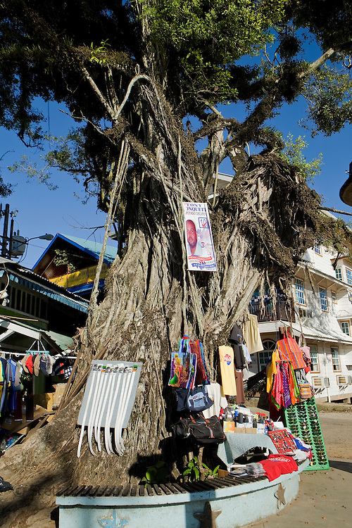 A large banyan tree in the middle of Bocas Town with souvenirs all around it for sale, Bocas del Toro, Panama