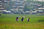 Two women and a girl carry a tarp, blankets and other items that they received from a church-sponsored aid group across a rice field in the Jamtoli Refugee Camp near Cox's Bazar, Bangladesh. <br /> <br /> More than 600,000 Rohingya have fled government-sanctioned violence in Myanmar for safety in Bangladesh.