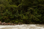 River flowing through southern andean yungas forest, Jujuy, Argentina